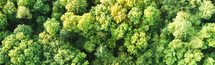 An aerial view of a forest representing the green practices Cloverly helps partners implement through carbon offsets.